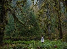 Bosque en Olimpyc National Park en E.E.U.U