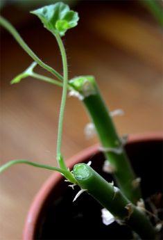 Beskåret over en udadvendt skud. Outdoor Plants, Plant Decor, Garden Inspiration, Gardening Tips, Planters, Flowers, Garten, Creative, Florals