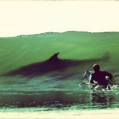 By Kurt Jones #shark #wave #fear #surf #surfphotography #surfer - @surfphotography