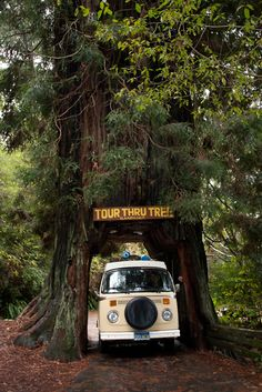 redwoods, norcal, we did this very thing but our VW camper was white!