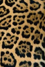 Image result for animal skins
