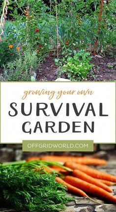 [LAST CHANCE]=> If you are crazy in love with florida survival gardening david the good, i'm with you. Many of us lose time to rework simple tasks over and over again because we don't know this secret. Click here to learn more about it today. This will be gone soon