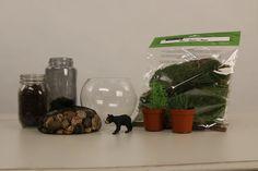 Make a DIY terrarium in a few easy steps!