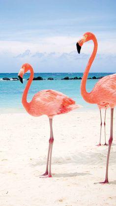 Обои wallpapers iPhone flamingo