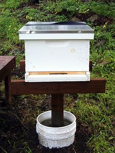 beehive stand Adopt A Hive Bees At Home On An Ant Proof Hive Stand Los Altos Bee Hive Stand, Beekeeping For Beginners, Raising Bees, Bee Boxes, Backyard Beekeeping, Bee Farm, I Love Bees, Save The Bees, Busy Bee