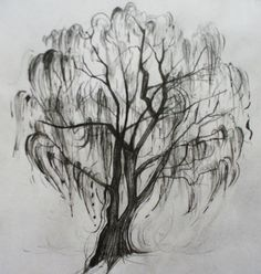 @Kara Morehouse Tillman for weeping willow tattoo...inspiration for my next one (my family tree)