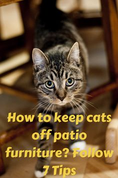How to keep cats off patio furniture? Follow 7 Tips Furniture Scratches, How To Clean Furniture, Cat Scratching, Hanging Out, Patio, Tips, Animals, Terrace, Animaux