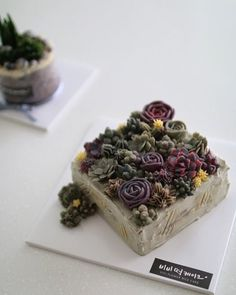 Rice Flower cake . . . www.vivi-cake.com . .  #flowercake #korea #design #cake #flowercakeclass #cakeclass #flowers #riceflower #koreaflowercake #koreanflowercake #piping #rice #riceflowercake #wilton #wiltoncake #koreanbuttercream #flowers #baking #vivicake #cupcake #seoul #hongdae #cakeicing #플라워케이크 #떡케이크 #플라워케이크떡케이크 Buttercream Designs, Buttercream Cake Decorating, Buttercream Flower Cake, Cactus Cupcakes, Cactus Cake, Flower Pot Cake, Flower Cakes, Boho Cake, Korean Rice
