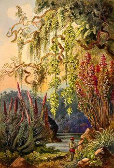 Ernst Haeckel | Nillu-Büsche und Hängebambusen Hochland von Ceylon | http://upload.wikimedia.org/wikipedia/commons/3/34/Haeckel_07.jpg