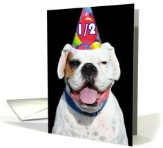 Happy 1/2 Birthday White Boxer Dog card  #white #boxer #card #cards #birthday #greetings #dog #pet