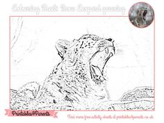 Here's a free printable Snow Leopard colouring sheet for your children, featuring original Printables4Parents photography.