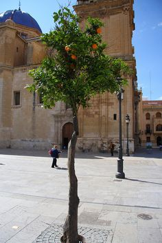 Elche, Alicante Spain by Dave-F, via Flickr