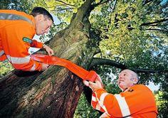 Umweltbetrieb will Bürger damit auf bevorstehende Fällung hinweisen +++  Kranke Bäume erhalten Banderolen