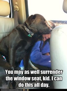 This was Milo and Kirra in the van the other day, and guess who moved...yep Kirra.