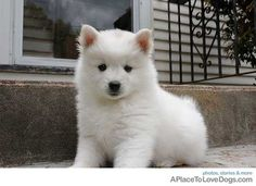 the puppy from the proposal. OMGG so CUTEEE