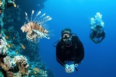 Maldives Tours, Resorts, Travel, Beach Holiday Packages, Book Tourism Packages with Hi Tours Little Fish, Big Fish, Maldives Tour Package, Lgbt, Maldives Holidays, Sea And Ocean, Beach Holiday, Beach Resorts, Scuba Diving