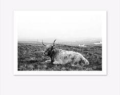 Highland Cow Print, Cow Print, Black and White Photography, Highland Cow Printable, Scandinavian Print, Nordic Print, Photography Prints