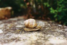 Snail, Animals, Pictures, Animales, Animaux, Animal, Animais, Slug