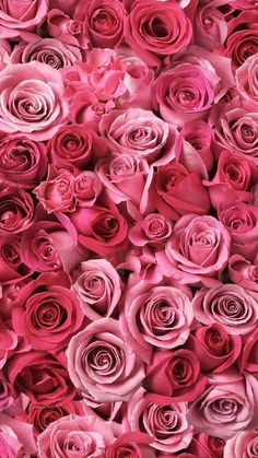 41 Best Rose Background Images Engagement Wedding Ideas Dream