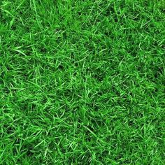Green grass 10'x10' CP Backdrop Computer printed Scenic Background zjz-526