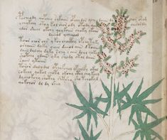 Voynich Manuscript partially decoded, text is not a hoax, scholar finds #medieval