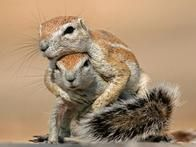 There's nothing like a  good squirrel hug to prepare for a long day of looting.