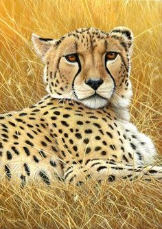 All images are the original artwork of nature artist and wildlife artist Dr. Jeremy Paul and are protected by international copyright laws. Beautiful Cats, Animals Beautiful, Cute Animals, Big Cats Art, Cat Art, Animal Paintings, Animal Drawings, Warrior Cats Art, Mundo Animal