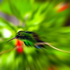 Humming Bird Zoom Blurred Photo by: Altinosmanaj  FREE - Embed this image and 2 million others, it's easy, legal and free! @Kozzi Images  #bird #humming #forest #tropical #wildlife #nature