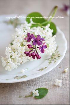twarożek z bzem (lilakie) i miodem lawendowym (11)