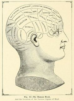 """A phrenology illustration.   from the public domain ebook, """"Hill's album of biography and art : containing portraits and pen-sketches of many persons (1882)."""" Browse, download for free here:  https://archive.org/stream/albumofbiography00hill"""