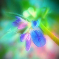 Macro worlds - by Pinvi #pinvi2012 #pinvi #photography #pinviphotography #macro #flowers #nature