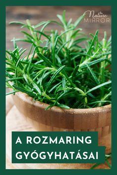 Aromatherapy, The Cure, Herbs, Health, Garden, Nature, Plants, Garten, Naturaleza