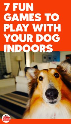 Seven Fun Games to Play with Your Dog Indoors - Good Doggies Online Want to know how to entertain your dog at home on a rainy day or in the winter? Check out these 7 fun games to play with your dog in Dog Games, Games To Play, Baby Dogs, Dogs And Puppies, Big Dog Little Dog, Living With Dogs, Pet Health Insurance, Dog Training, Training Tips