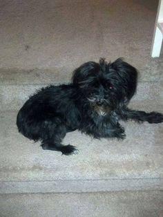 John Jaramillo  Found dog....In Smoky Hill Neighborhood. Buckley and Orchard major cross streets. 720-290-7184 to claim