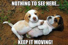 LOVE Beagles!