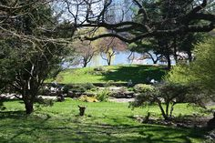 """High Park, """"one of the loveliest parks in North America"""" according to Fodor's travel guide for Toronto."""