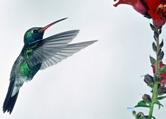 reminds me of all the hummingbirds in laguna