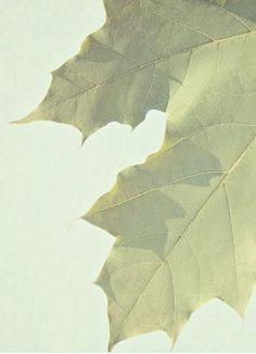 Leaf www.landnsand.co.za