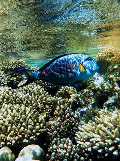 Funny Wildlife, fishy by lauren havenga on Flickr. #Egypt
