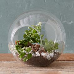 """With multiple openings for foliage to emerge, this airy glass vessel makes the perfect place to display tillandsia.- Glass- Hand wash- Indoor or sheltered outdoor use- Imported8""""H, 6.75""""W 8""""H,$34 ea"""