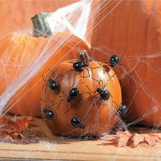 Spider Pumpkin Push-Ins - OrientalTrading.com