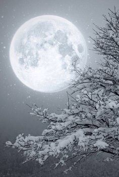 Winter Moon ~~ Moon light by Lupone Giovanna on Moon Moon, Big Moon, Luna Moon, Snow Scenes, Winter Scenes, Ciel Nocturne, Shoot The Moon, Winter Wonderland Christmas, Prim Christmas