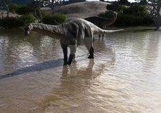 Apatosaurus by numbat66.deviantart.com on @DeviantArt