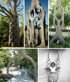 More of Axel Erlandson's Circus Trees.  He died never sharing his secret of creating these fanciful trees.