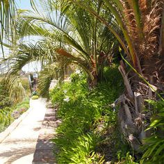 Tropical Landscape Design, Pictures, Remodel, Decor and Ideas - page 103