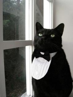 very classy black cat