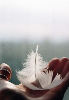 Angel feathers that are shed have magical properties. But, plucked ones can bring great evil. it is a horrendous thing to maim an angel. Feather Photography, White Photography, People Photography, Angels Among Us, White Feathers, Storyboard, Tumblr, In This Moment, Black And White