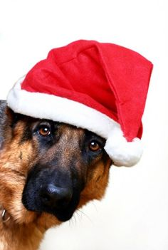German Shepherd Merry Happy Christmas Day Card Puppy Holiday Dogs Santa Claus Dog Puppies Xmas #MerryChristmas