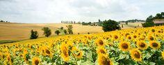 France: Sunflowers El Camino de Santiago by KatrencikPhotoArchives, via Flickr