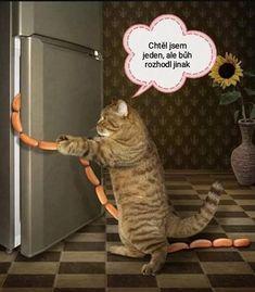 Carpe Diem, Jokes, Lol, Cats, Funny, Animals, Meme, Historia, Gatos